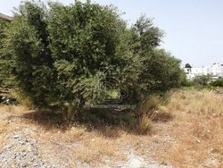 Plot for Sale - Gennadi South Rhodes